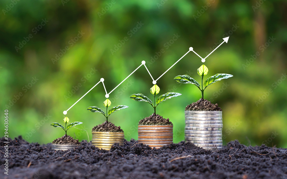 Fototapeta Plant small plants on coins stacked on the concept of saving money and growing money.