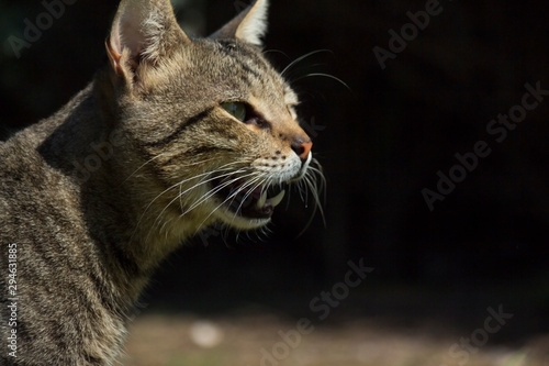 cute cat walking outdoor at sunny day