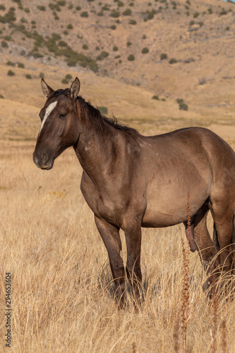 Wild Horse in the Utah Desert in Fall