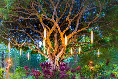 Colorful Hawaiian Banyan Tree with Fire and Lights Wallpaper Mural