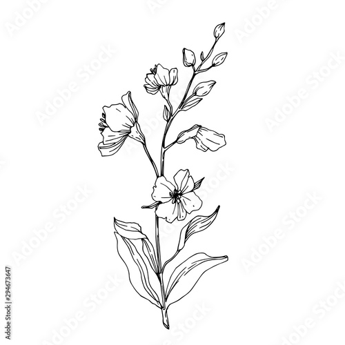 Fototapety, obrazy: Vector Wildflower floral botanical flowers. Black and white engraved ink art. Isolated flower illustration element.