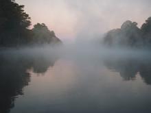 Bayou Swampland Louisiana.