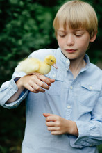 Child Holding Duckling On His ...