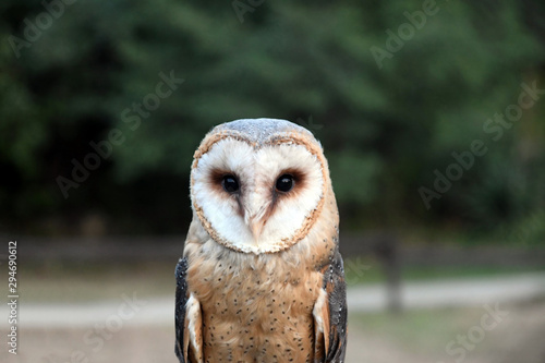 Fotobehang Uil Owl, friendly animals in the zoo
