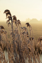 Cold Winter Morning On The Dutch Countryside