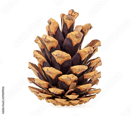 Fotografie, Obraz Brown pine cone isolated on white background