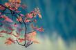 canvas print picture - herbstfarben
