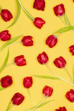 Tulip Flowers Background