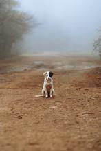 The Stray Puppy