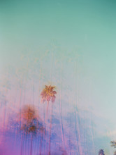 Blue Sky With Palm Trees And Purple And Pink Colors Film Double Exposure