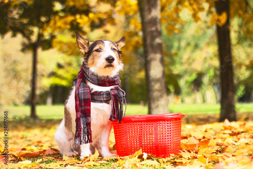 A beautiful dog in a scarf sits in the leaves in golden autumn, with a picnic basket outside in the park Canvas Print