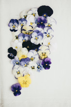 Composition Of Different Kinds Of Pansies All Together On Cotton Background