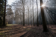 Shafts Of Light Through Mist F...