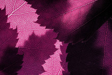 Pink Spring Leaves Background