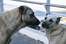 Two Cute Urban Stray Dogs, Get...