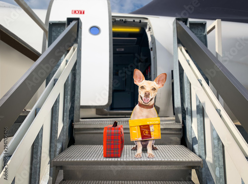 Tuinposter Crazy dog dog as pet in cabin in airplane