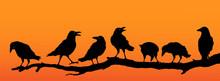 Rabenvögel Am Ast, Raben Gruppe Silhouette Im Sonnenuntergang, Vektor Illustration Isoliert Auf Weißem Hintergrund