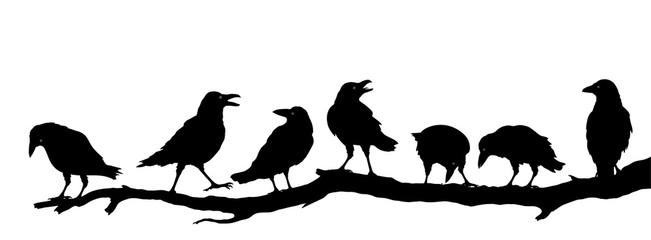 Rabenvögel am Ast, Raben Gr...