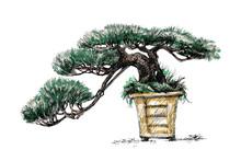 Coniferous Bonsai In A Square ...