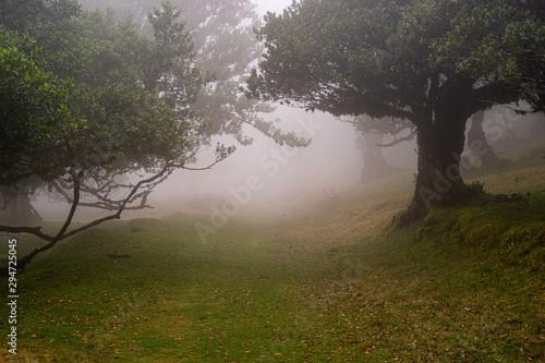 Fanal, Paúl da Serra, Ilha da Madeira Tapéta, Fotótapéta