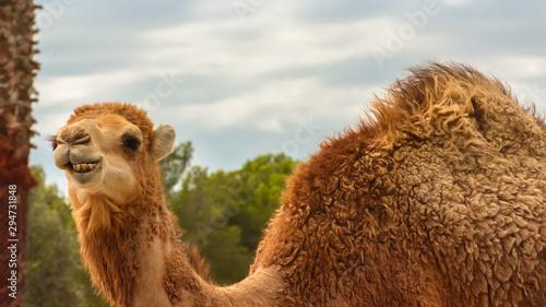 Fotografija Natural Park Reservation Reserva Africaine Sigean Camel