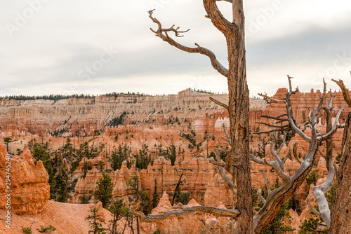 Dead Branches in a Life-hostile Canyon Area, Bryce Canyon, Utah/USA Fototapeta