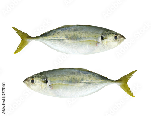 BAREBREAST JACK Fish isolated on white. Fototapeta