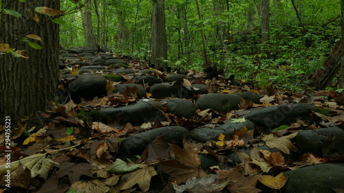 Photo sur Toile Route dans la forêt 森の道