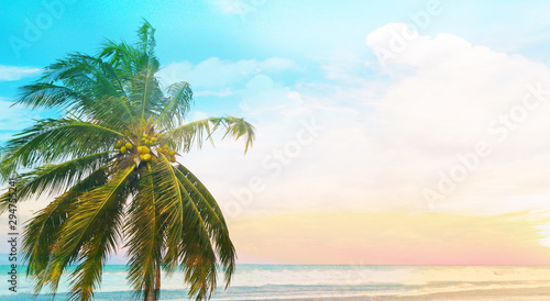 Foto auf AluDibond Palms Coconut palm tree with blue sunset sky and sea background, copy space text area, wide composition.
