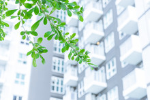 Green Eco City Green Tree Plant With High Rise Condominium Public Urban Accommodation Background