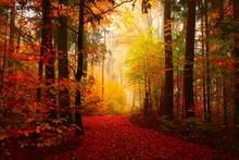 Buchenwald In Herbstimmung