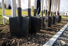 Shovels Stand In A Row, Tree Planting