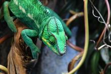 Tropical Reptiles In A Terrarium