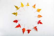 Colorful Fall Leaves On White ...