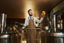 Brewery Expert Inspecting Beer...