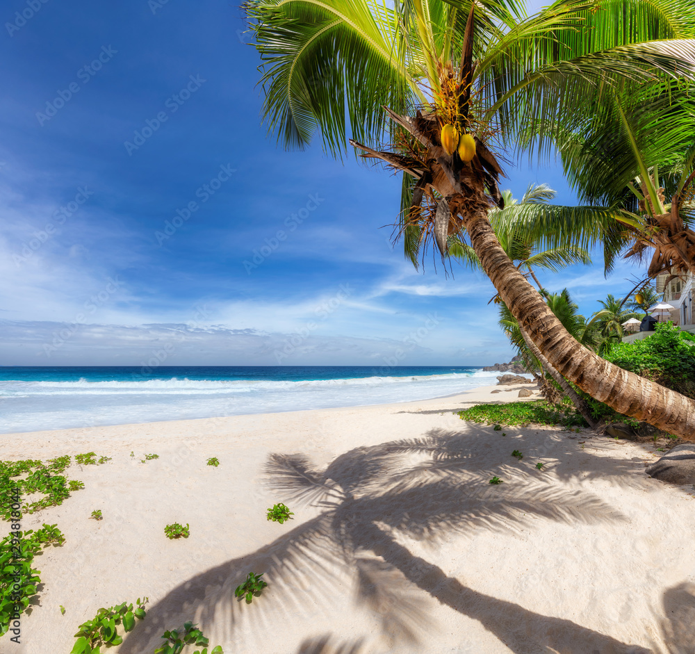 Fototapety, obrazy: Tropical Beach. Sandy beach with palm and turquoise sea. Summer vacation and tropical beach concept.