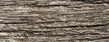 Bark Of A Tree Surface Texture