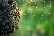 Vintage Golden Keys On Forest Background. Magical Art Composition With Beautiful Key, Concept Secret Garden, Mystery. Soft Selective Focus. Close Up. Shallow Depth