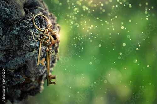 Foto auf Gartenposter Baume vintage golden keys on forest background. magical art composition with beautiful key, concept secret garden, mystery. soft selective focus. close up. shallow depth