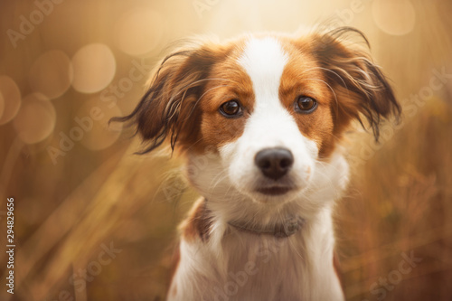 Obraz Portrait of a cute dog looking straight in the lens - fototapety do salonu