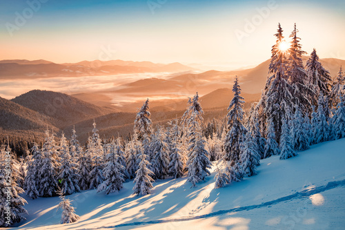 impressive-winter-scene-of-carpathian-mountains-with-snow-covered-fir-trees-spectacular-outdoor-scene-of-moumtain-forest-beauty-of-nature-concept-background