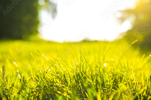Foto auf AluDibond Gelb Green grass outdoors in sunset lights. Summer spring meadow landscape on a sunny day. Nature eco friendly photo. Wallpaper.