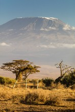 View Of Mt Kilimanjaro In The Afternoon