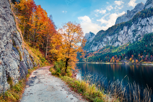 Fototapeta Amazing autumn scene of Vorderer / Gosausee lake. Gorgeous morning view of Austrian Alps, Upper Austria, Europe. Beauty of nature concept background. Amazing world of Alpine Mountains. obraz