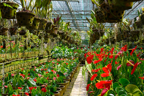 Flowers blooming at the botanic garden Billede på lærred