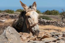 Seles, Eastern Crete, Greece. ...
