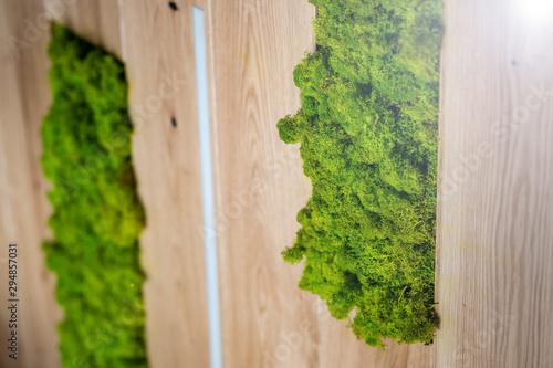 Fotografie, Obraz Mech - architektura - zielony dodatek