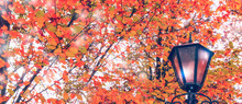Autumn Landscape. Trees With B...