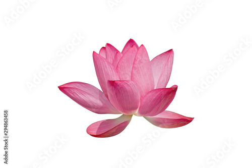 Poster de jardin Nénuphars Lotus flower isolated on white background