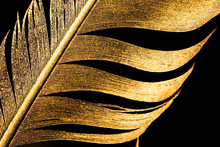 The Feather Is Covered With Gold Paint Close-up. Pen For Calligraphy. Golden Feather.